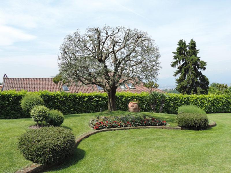 Vivai daniele todeschini manutenzione giardini for Manutenzione giardini